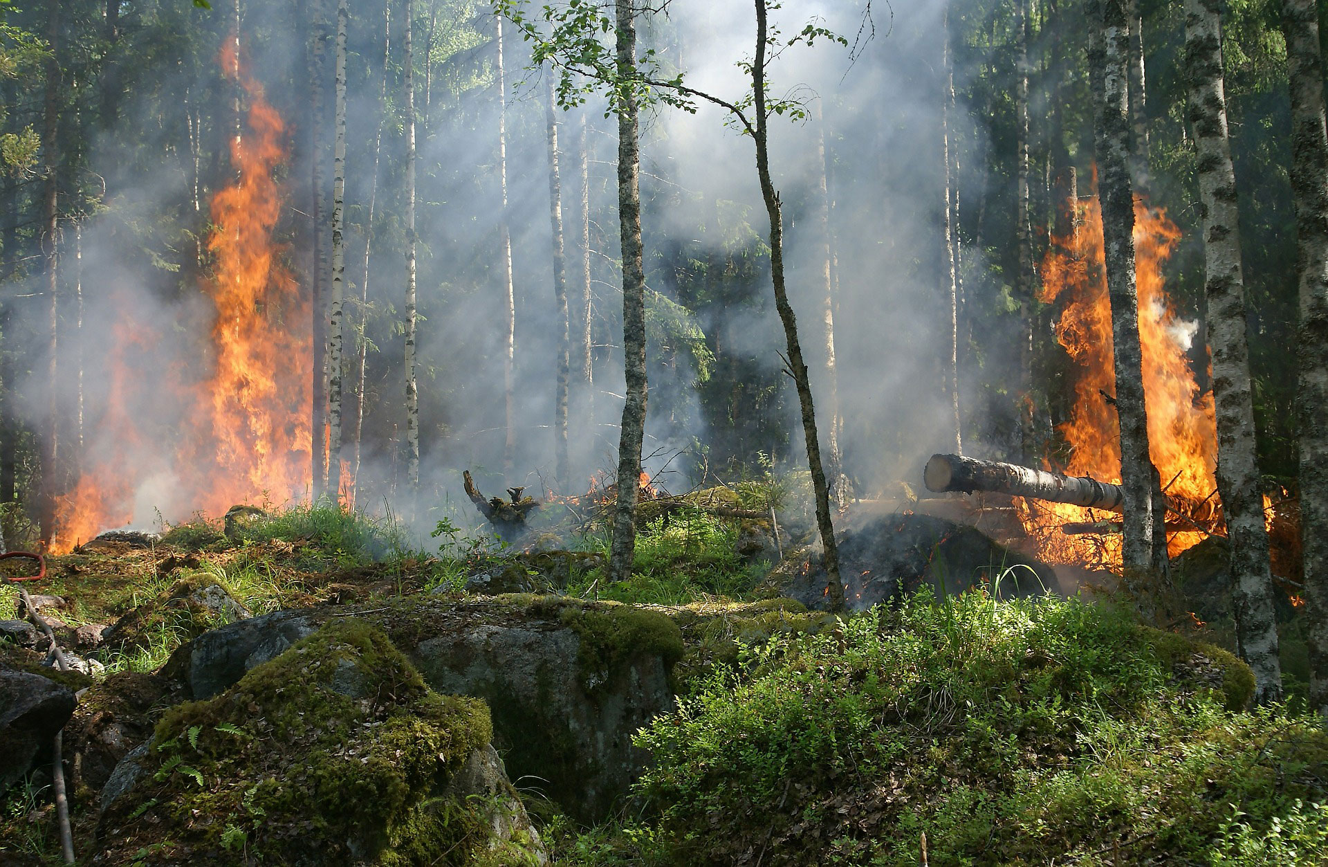 Wildfire Defense Tips