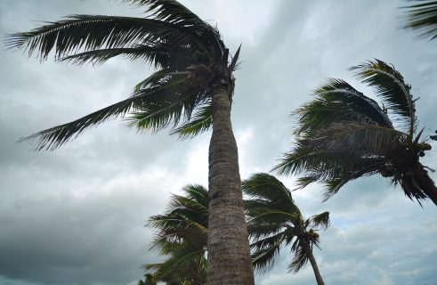 Wind Deductible Buybacks Lessen Blow from High Premiums and Frequent Storms